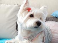 https://westy.it/media/avatar/profile-WendydeiBoschi.jpg